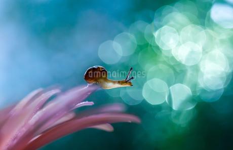 カタツムリの写真素材 [FYI04091108]