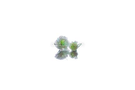 白い花の写真素材 [FYI04091124]
