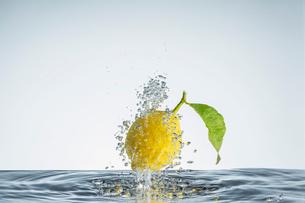 水の中のレモンの写真素材 [FYI04091162]