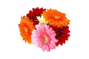 ガーベラの花束の写真素材 [FYI04091165]