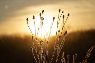 霧氷と太陽の写真素材 [FYI04091175]