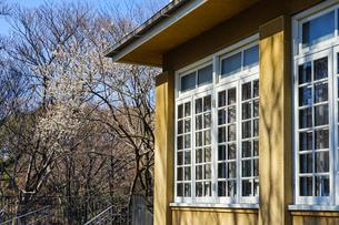 白枠窓と梅の花の写真素材 [FYI04091196]