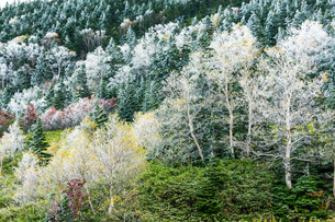 横手山霧氷の写真素材 [FYI04091201]