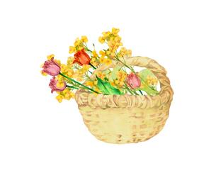 チューリップと菜の花の花籠のイラスト素材 [FYI04091214]