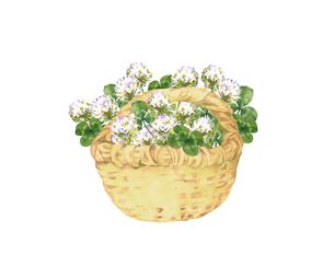 シロツメクサの花籠のイラスト素材 [FYI04091215]