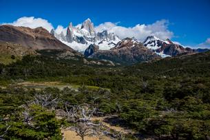 パタゴニアの名峰フィッツロイと南極ブナの森の写真素材 [FYI04091252]