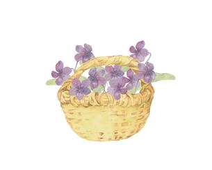 菫の花籠のイラスト素材 [FYI04091397]