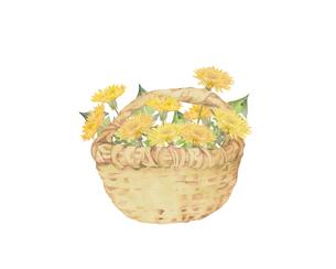 たんぽぽの花籠のイラスト素材 [FYI04091398]