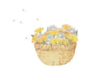 タンポポと綿毛の花籠のイラスト素材 [FYI04091399]
