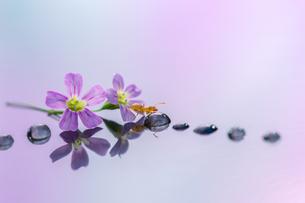 花とアリの写真素材 [FYI04091458]
