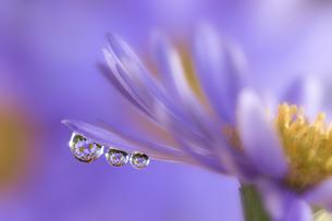 花としずくの写真素材 [FYI04091461]