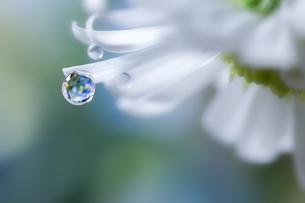 花としずくの写真素材 [FYI04091471]