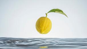 水の中のレモンの写真素材 [FYI04091574]