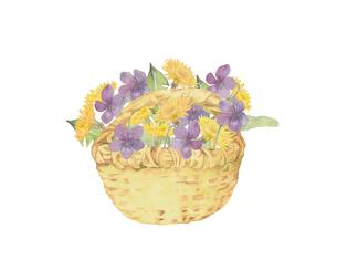 スミレとたんぽぽの花籠のイラスト素材 [FYI04091658]