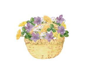 春の花のフラワーバスケットのイラスト素材 [FYI04091659]
