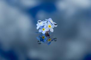 水に浮かぶ花としずくの写真素材 [FYI04091754]