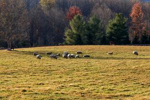 アメリカ、ヴァージニア州リトルワシントン村の風景の写真素材 [FYI04091990]