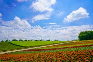 青空と花畑の写真素材 [FYI04092040]