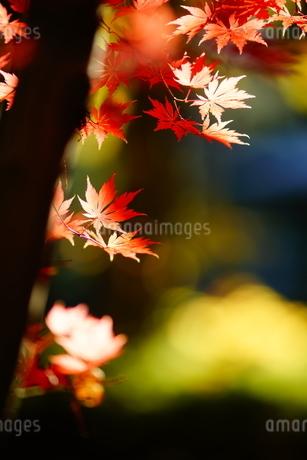 秋彩の写真素材 [FYI04092051]