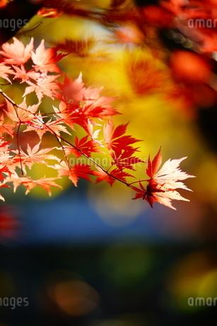 秋彩の写真素材 [FYI04092052]