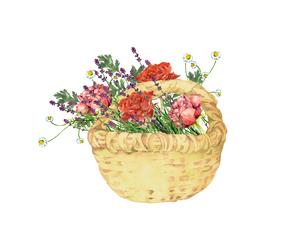薔薇とハーブの花籠のイラスト素材 [FYI04092244]