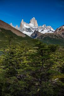 パタゴニアの名峰フィッツロイと南極ブナの写真素材 [FYI04092270]