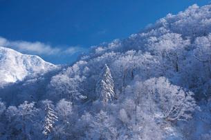 オロフレ峠の樹氷の写真素材 [FYI04092449]