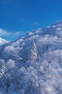 オロフレ峠の樹氷の写真素材 [FYI04092450]