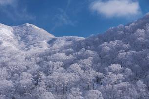 オロフレ峠の樹氷の写真素材 [FYI04092451]