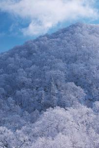 オロフレ峠の樹氷の写真素材 [FYI04092452]