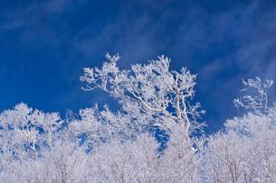 オロフレ峠の樹氷の写真素材 [FYI04092453]