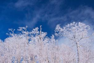 オロフレ峠の樹氷の写真素材 [FYI04092456]