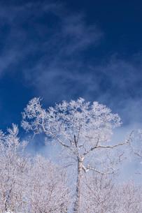 オロフレ峠の樹氷の写真素材 [FYI04092457]