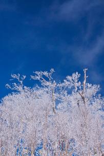 オロフレ峠の樹氷の写真素材 [FYI04092458]