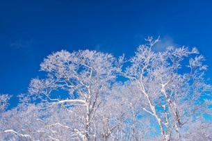 オロフレ峠の樹氷の写真素材 [FYI04092459]