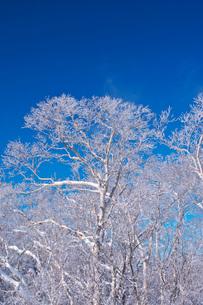 オロフレ峠の樹氷の写真素材 [FYI04092460]