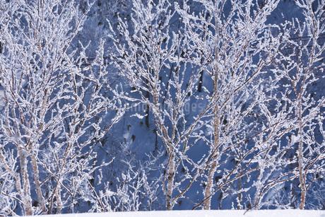 オロフレ峠の樹氷の写真素材 [FYI04092466]