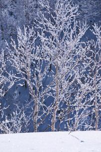 オロフレ峠の樹氷の写真素材 [FYI04092467]