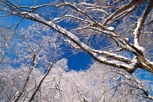 ふきだし公園の樹氷の写真素材 [FYI04092529]