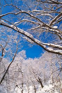 ふきだし公園の樹氷の写真素材 [FYI04092530]
