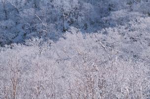 オロフレ峠の樹氷の写真素材 [FYI04092533]