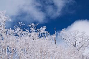 オロフレ峠の樹氷の写真素材 [FYI04092537]