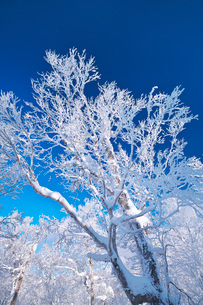 オロフレ峠の樹氷の写真素材 [FYI04092549]