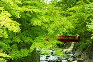 桂橋の写真素材 [FYI04092575]