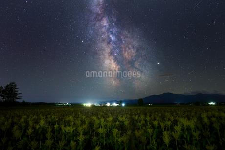天の川とトウモロコシ畑の写真素材 [FYI04092866]