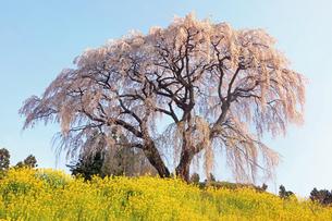 4月 芹ヶ沢の桜 -福島の桜-の写真素材 [FYI04092876]