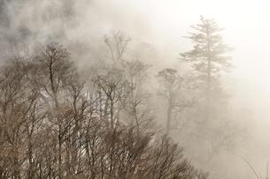 煙る山林の写真素材 [FYI04093043]