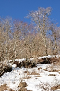 冬の山地の写真素材 [FYI04093045]