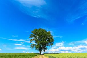 哲学の木の写真素材 [FYI04093185]
