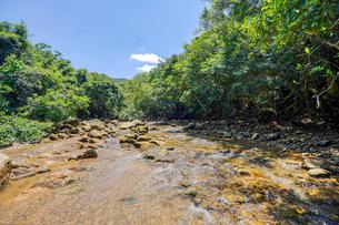 西表島の川の写真素材 [FYI04093187]